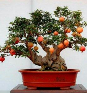 """Набор для выращивания бонсай """"ГРАНАТ"""""""