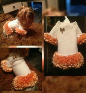Одежда в наличии для собаки или кошки