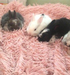 Декоративные крольчата .
