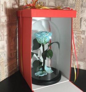 Живая роза в стеклянной колбе / Роза в колбе