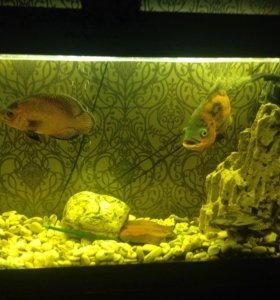 Готовый аквариум 150л срочно
