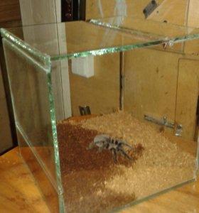 Террариум для паука птицееда