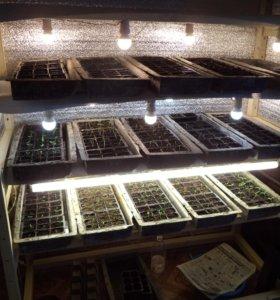 Этажерка для выращивания рассады