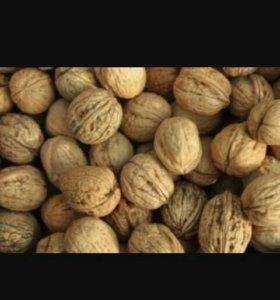 Куплю орехи
