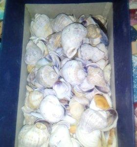 Ракушки и камни в аквариум