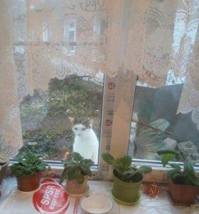 Котятки домашние.