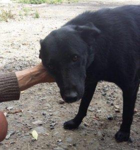 Собаки в добрые руки 2