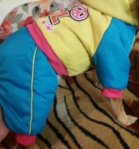 Куртка для собаки(мальчик)