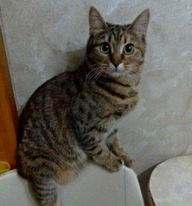 Кошка Сара в добрые руки