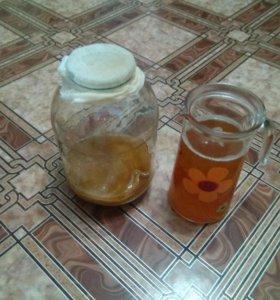 Чайный гриб
