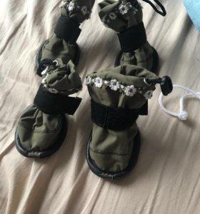 Ботинки для собак
