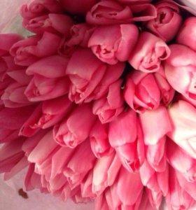 Продажа голландских тюльпанов