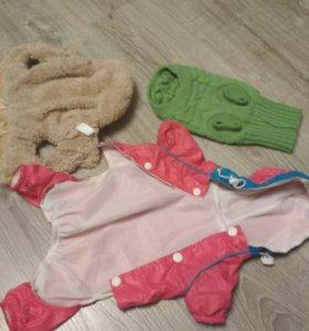 Одежда для чихуахуа, размер s