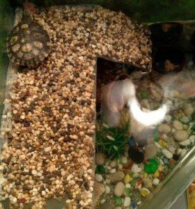 Черепашка с аквариумом