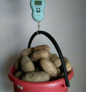 Картофель жёлтый, домашний. Доставка.