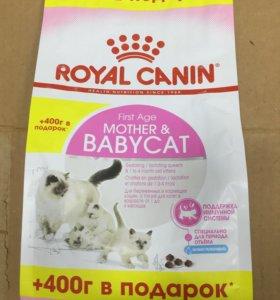 Роял Канин для беременных и кормящих кошек 800гр
