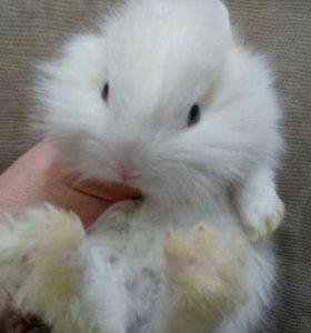 Кролик карликовый. Большой выбор