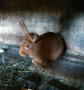 Кролики тушка по заказу 850 р(450 кг)