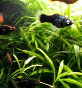 Аквариумная рыба,растения,корма,кондиционеры