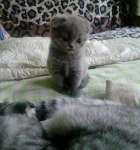 Котята ищут новый дом!!!