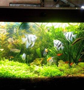 Разовая чистка, регулярное обслуживание аквариума