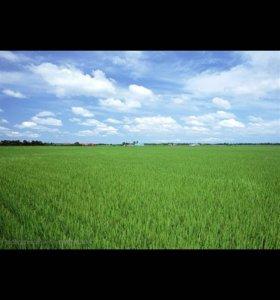 Участок, 28 сот., сельхоз (снт или днп)