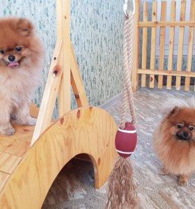 Гостиница для маленьких собак