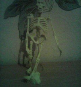 Игрушка скелет