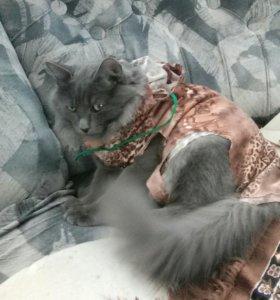 Котёнок 6 месяцев