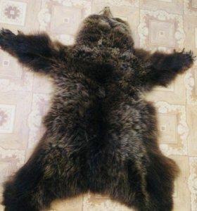 Шкура бурый медведь