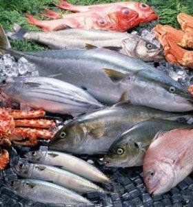 Продам свежемороженую,морскую рыбу некондиция