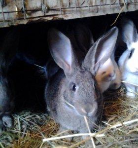 Кролики и крольчата на развод