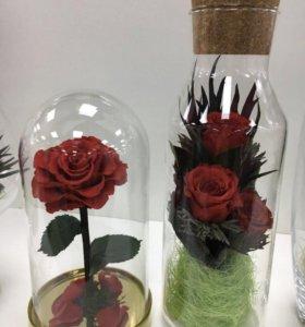 Роза в колбе «Красавица и чудовище»