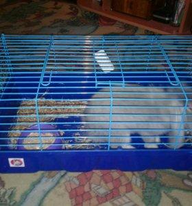 Кролик декоративный вислоухий