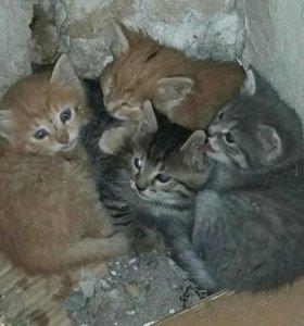 Котята коты и кошки