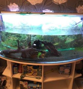 Продам аквариум-сфера.300л. С тумбой и лампой.