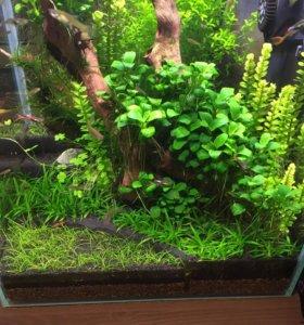 Растения для мини аквариума