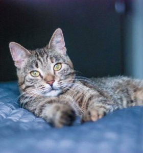 Ласковая молодая кошка