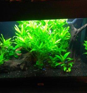 Аквариум Juwel rio 125 (немецкий)