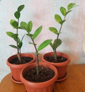 Растение(цена за 1 шт.)