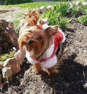 Продаю вязаные кофты для собак мелких пород