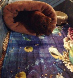 Флисовый мешочек для морской свинки