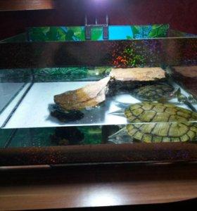 Черепашник с двумя красноухими черепахами