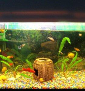 Продам аквариум в комплектации