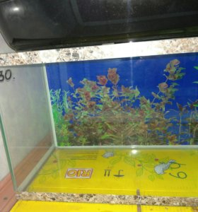 Новый аквариум на 30 литров