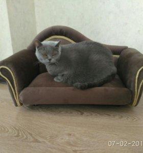 Диван для кошки