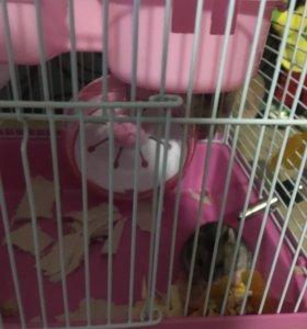 Продам мышку с клеткой