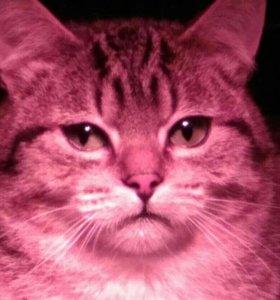Котик Боня 9 месяцев