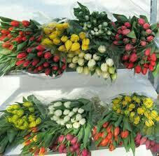 Тюльпаны Приморские