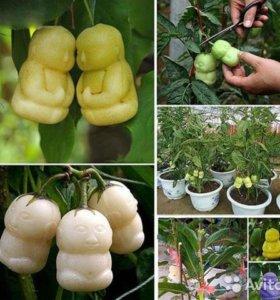 Семена редких Delicious Baby женьшеня - 5 шт